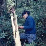 José Lopez arrachant l'écorce pour en faire des bateaux artisanaux